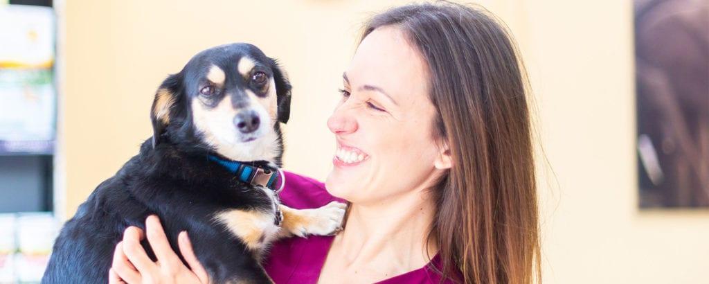 cabeceras-urpesvet-esterilizacion-perro-veterinario