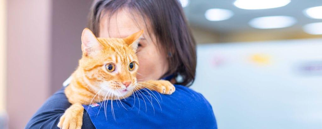 gato-urpesvet-veterinaria-consulta