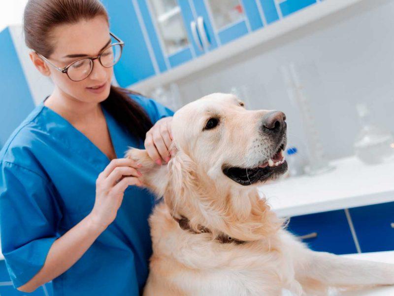 frakmenta-servicios-veterinarios-fraccionados-perro