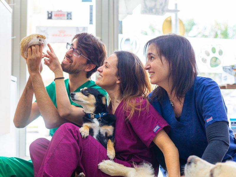 servicios-urpesvet-veterinarios-perros-gatos-exoticos